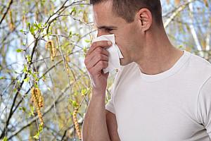 Birkenpollen: Allergien durch Pollen häufen sich