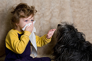Hundehaarallergie: Wenn der beste Freund krankmacht