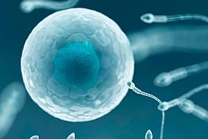 Fruchtbarkeit steigern beim Mann: Nahrungsergänzungsmittel und Vitamine für Männer mit Kinderwunsch