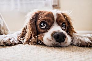 DDurchfall beim Hund: mit Durchfallmitteln und Schonkost helfen