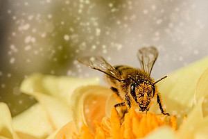 Bekämpfung der Varroamilbe – Mittel gegen Varroamilbe
