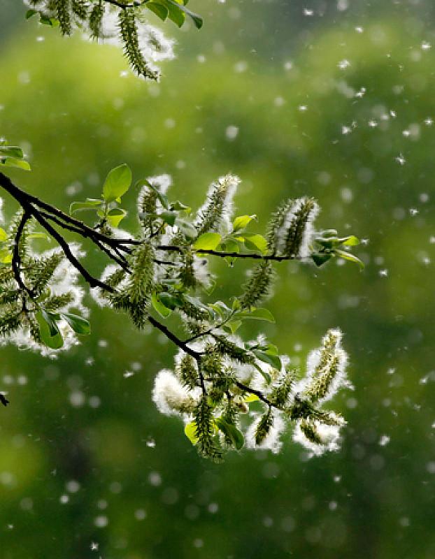 pollenallergie durch blütenpollen flug