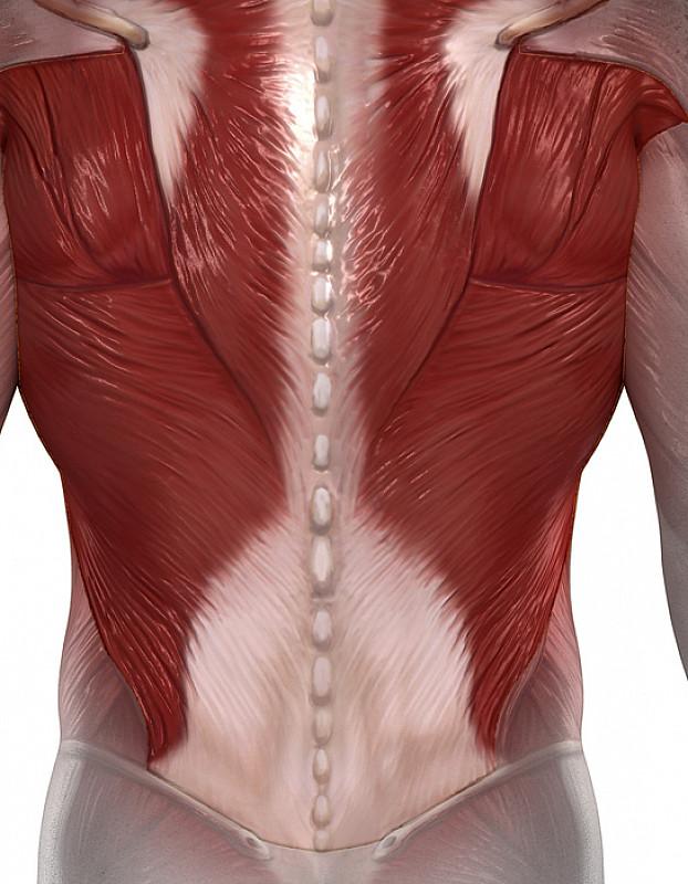 muskeln benötigen magnesium