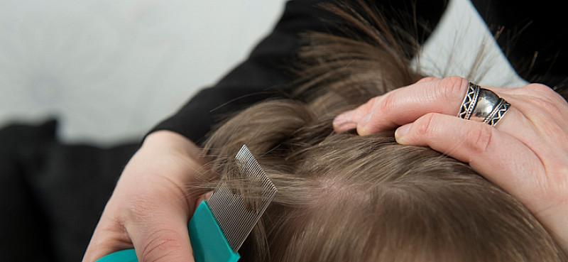 Kopfläuse, wenn Kindern der Kopf juckt