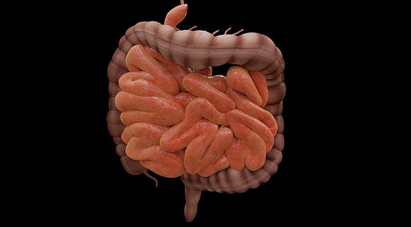 Darmsanierung: Gesunde Darmflora und Immunsystem