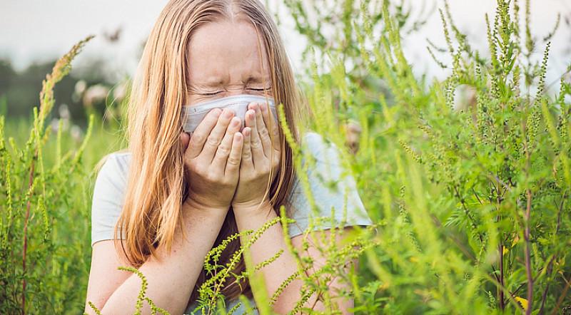 Gräserallergie: Sommermonate werden zur Qual
