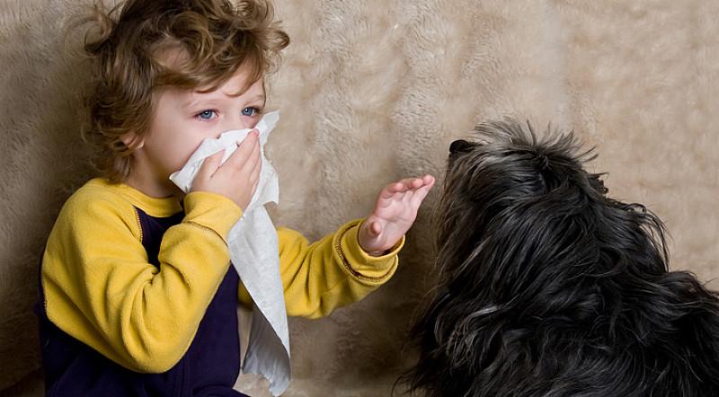 Tierhaarallergie: Wenn das Kuscheln mit Hund & Katze krank macht