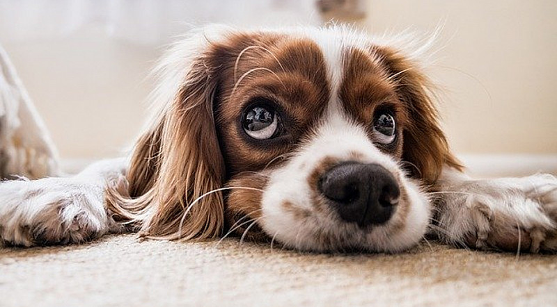 Durchfall beim Hund: Diese Mittel helfen