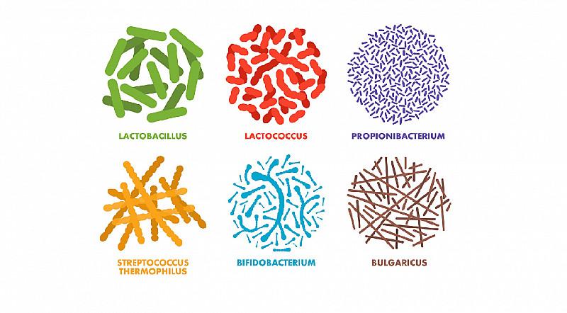Probiotika und Darm Gesundheit