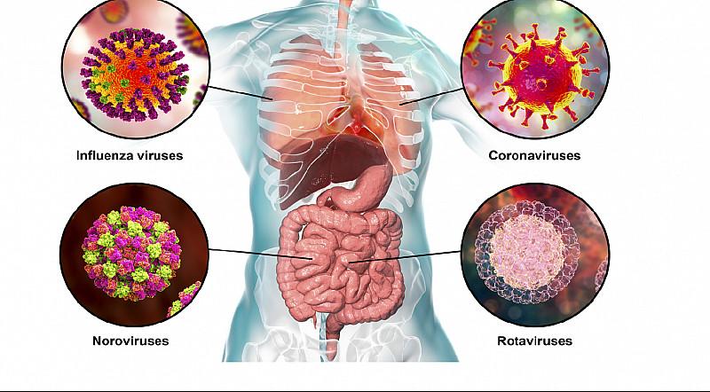 Bekannte humande Viren und Corona-Virus
