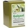 Galgant, 60 Stück, Diamant Natuur GmbH