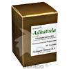 Adhatoda, 60 Stück, Diamant Natuur GmbH