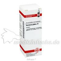 HERNIARIA GLABRA URT, 20 ML, Dhu-Arzneimittel GmbH & Co. KG