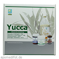 YUCCA KUR 1 MONAT, 1 P, Apozen Vertriebs GmbH