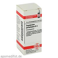EUPATORIUM PERF D 4, 10 G, Dhu-Arzneimittel GmbH & Co. KG