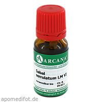 SABAL SERRULAT ARCA LM 6, 10 ML, ARCANA Dr. Sewerin GmbH & Co. KG