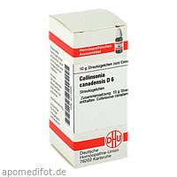COLLINSONIA CANADENS D 6, 10 G, Dhu-Arzneimittel GmbH & Co. KG