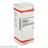 GNAPHALIUM POLYC D 6, 50 ML, Dhu-Arzneimittel GmbH & Co. KG