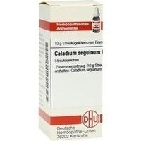 CALADIUM SEGUIN C 6, 10 G, Dhu-Arzneimittel GmbH & Co. KG