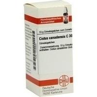 CISTUS CANADENS C30, 10 G, Dhu-Arzneimittel GmbH & Co. KG
