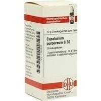 EUPATORIUM PURPUR C30, 10 G, Dhu-Arzneimittel GmbH & Co. KG