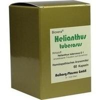 Helianthus tuberosus, 60 ST, Diamant Natuur GmbH