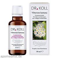 Gemmoextrakt Wolliger Schneeball, 50 ML, Dr. Koll Biopharm GmbH